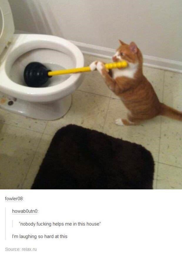 """Cat - fowler08: howab0utn0: """"nobody fucking helps me in this house Im laughing so hard at this Source relax.ru"""