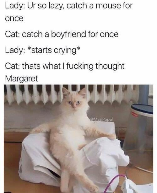 Cat - Lady: Ur so lazy, catch a mouse for once Cat: catch a boyfriend for once Lady: *starts crying* Cat: thats what I fucking thought Margaret MasiPopal