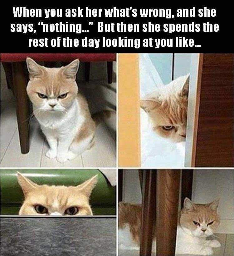 """Cat - When you ask her what's wrong, and she says, """"nothing..."""" But then she spends the rest of the day looking at you like.."""