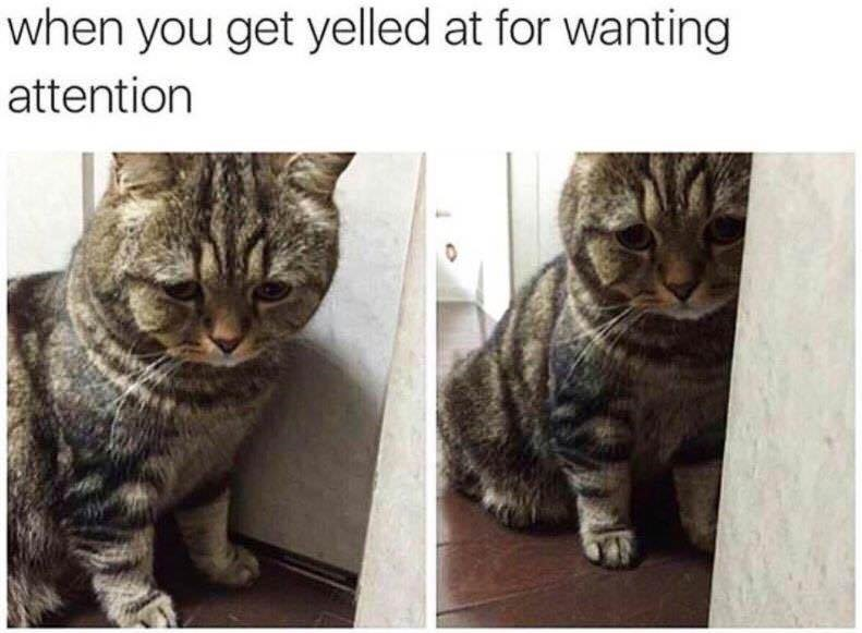 Cat - when you get yelled at for wanting attention