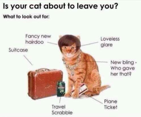 Cat - Is your cat about to leave you? What to look out for Fancy new hairdoo Loveless glare Suitcase New bling- Who gave her that? Plane Ticket Travel Scrabble