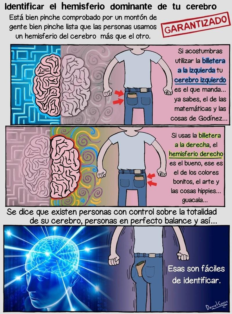 uso de los hemisferios del cerebro con la billetera