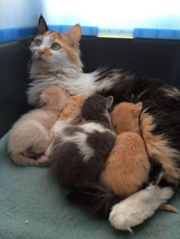 parenting animals - Cat