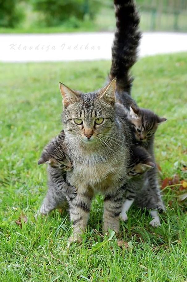 parenting animals - Cat - Κiasdia Μedtdε Ο