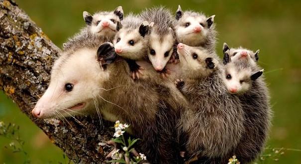parenting animals - Mammal