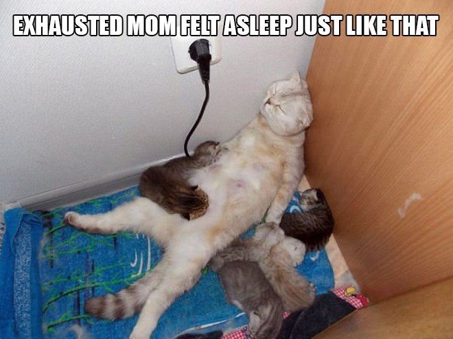 parenting animals - Cat - EXHAUSTED MOM FELT ASLEEP JUSTLIKE THAT