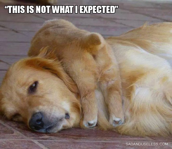 """parenting animals - Dog - """"THIS IS NOT WHAT I EXPECTED"""" SADANDUSELESS.COM"""