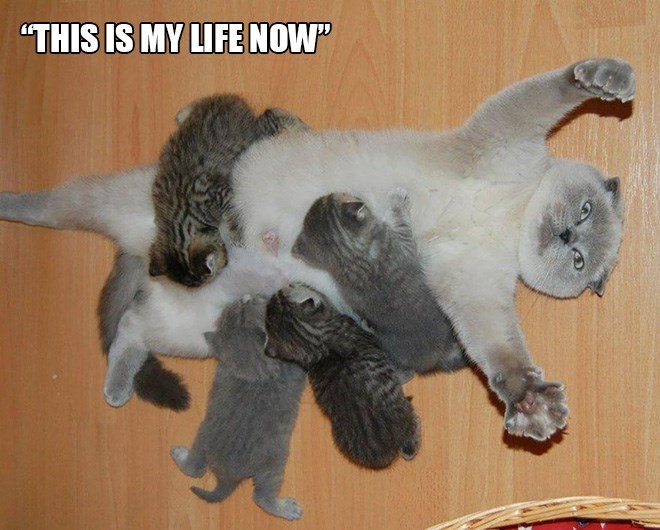 """parenting animals - Cat - """"THIS IS MY LIFE NOW"""