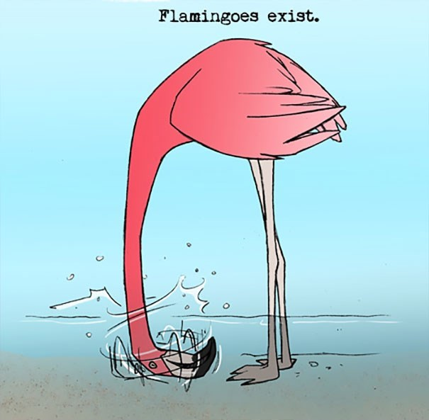 Greater flamingo - Flamingoes exist.