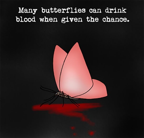 Organism - Many butterflies can drink blood when given the chance.