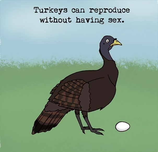 Bird - Turkeys can reproduce without having sex.