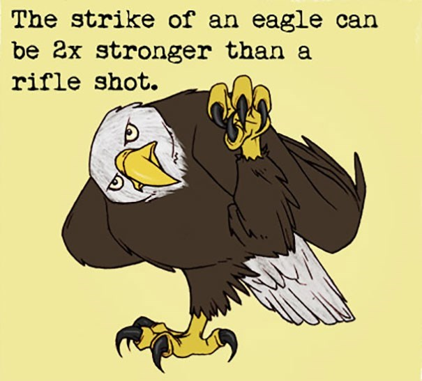 Bird - The strike of an eagle can be 2x stronger than a rifle shot.