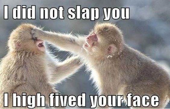 monkey meme with pic of two monkeys slapping each other
