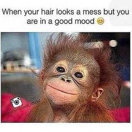 monkey meme about being happy and messy with pic of smiling monkey with messy hair