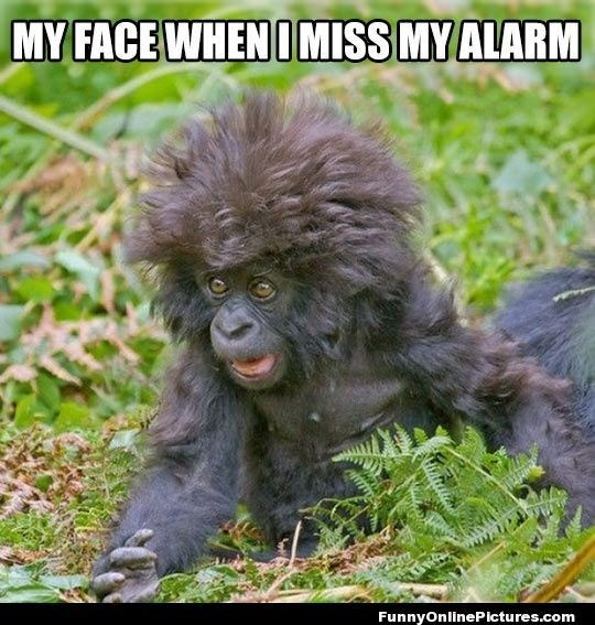 monkey meme about not waking up in time with pic of panicked monkey with messy hair