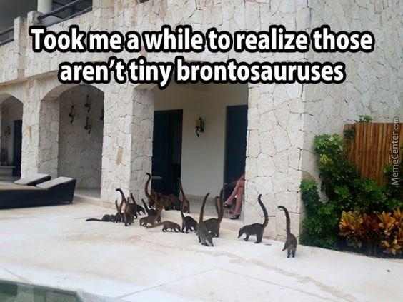 monkey meme about pack of lemurs looking like tiny dinosaurs