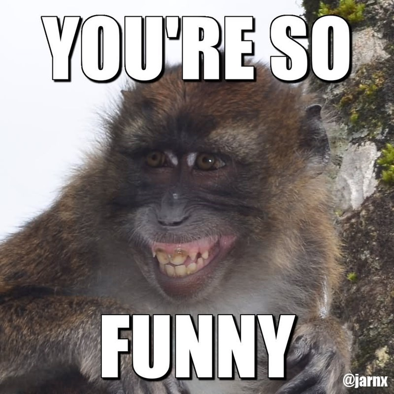 monkey meme with pic of monkey smiling with visible teeth