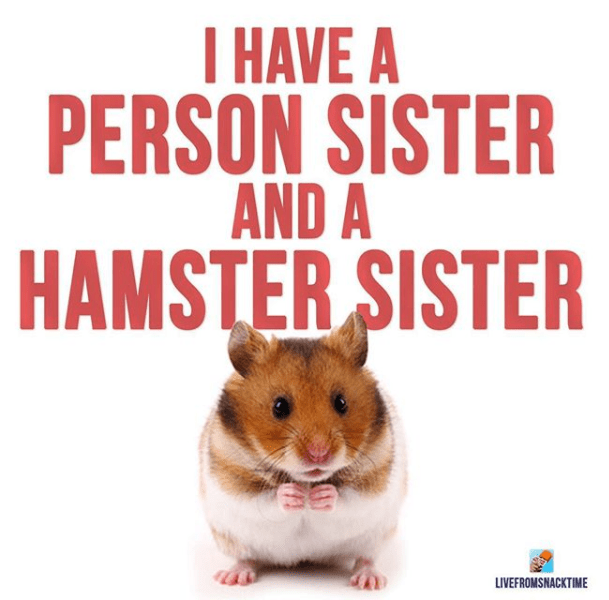 Hamster - HAVE A PERSON SISTER AND A HAMSTER SISTER LIVEFROMSNACKTIME