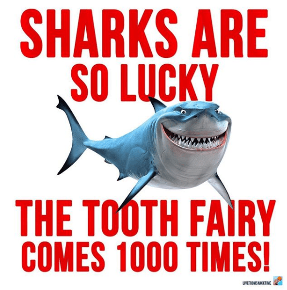 Fish - SHARKS ARE SO LUCKY THE TOOTH FAIRY COMES 1000 TIMES! IVEFROMSNACKTIME