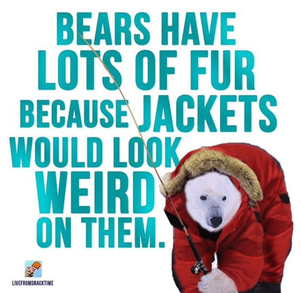 Bear - BEARS HAVE LOTS OF FUR BECAUSEJACKETS WOULD LOOK WEIRD ON THEM. LIVEFROMSNACKTIME