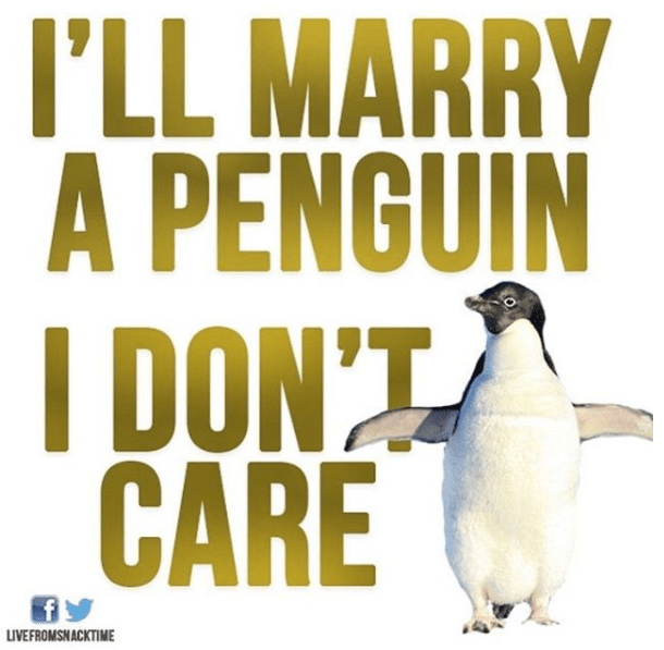 Penguin - I'LL MARRY A PENGUIN IDON'T CARE LIVEFROMSNACKTIME