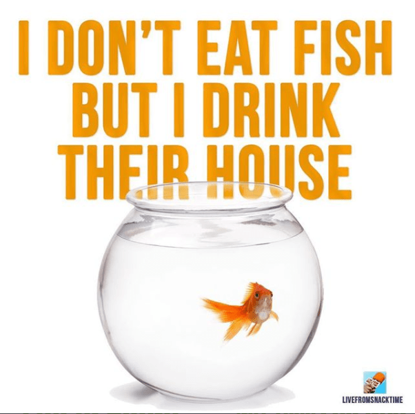 Goldfish - I DON'T EAT FISH BUT I DRINK THEIR HOUSE LIVEFROMSNACKTIME