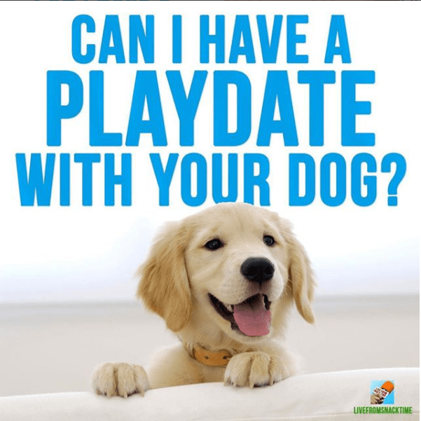 Dog - CAN I HAVE A PLAYDATE WITH YOUR DOG? LIVEFROMSNACKTIME