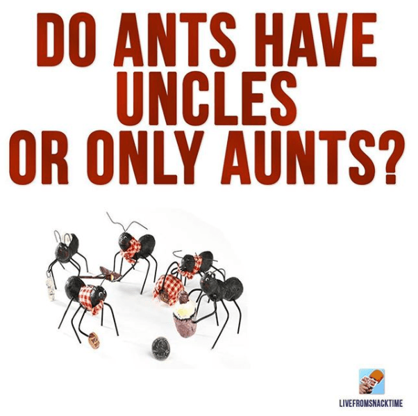 Text - DO ANTS HAVE UNCLES OR ONLY AUNTS? LIVEFROMSNACKTIME