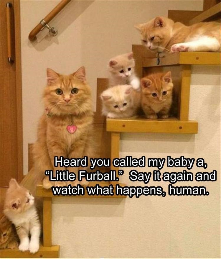 caturday meme about being threatened by mama cat