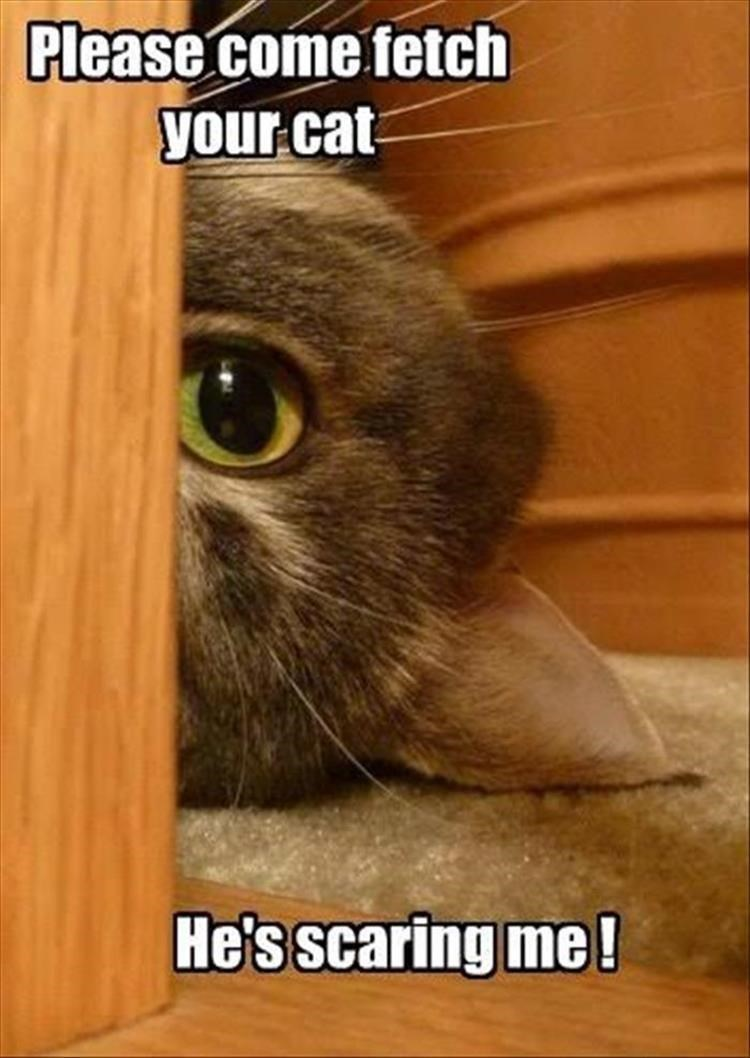 caturday meme about a scary cat peeking from behind the furniture