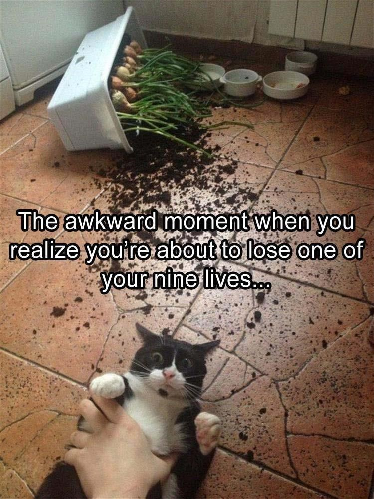 caturday meme about a cat creating a mess and losing a life