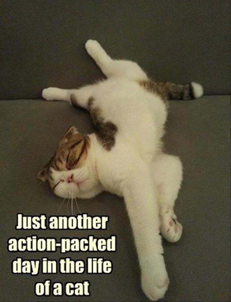 caturday meme about a cat passing out after a long day