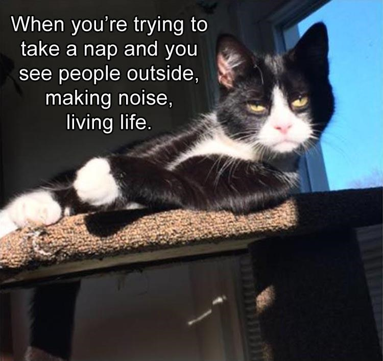 caturday meme about trying to nap