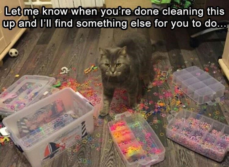 caturday meme about a cat creating messes for the owner to clean