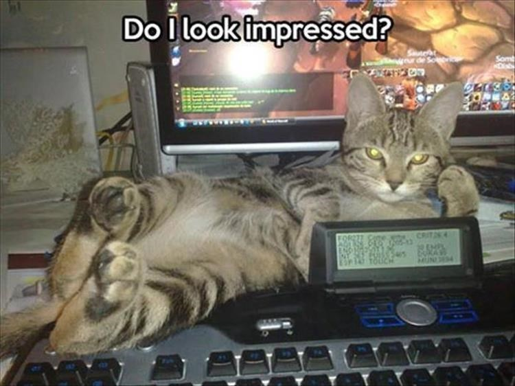 caturday meme about an unimpressed cat