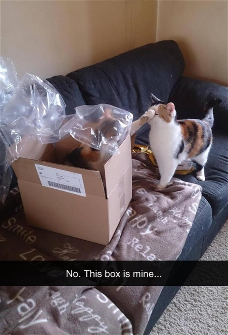 caturday meme with snapchat of cats fighting over a cardboard box