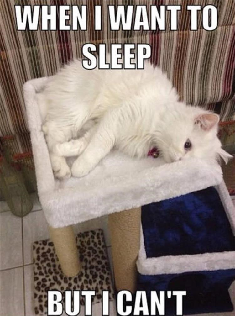 caturday meme about having trouble falling asleep