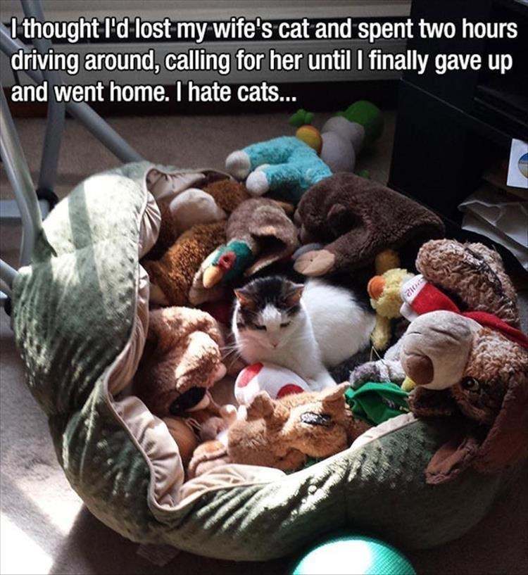 caturday meme about a cat hiding in a pile of stuffed toys