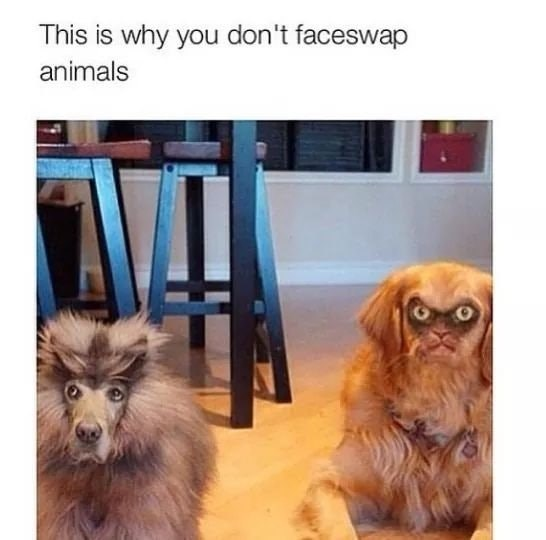 Funny meme about face swapping cats and dogs.