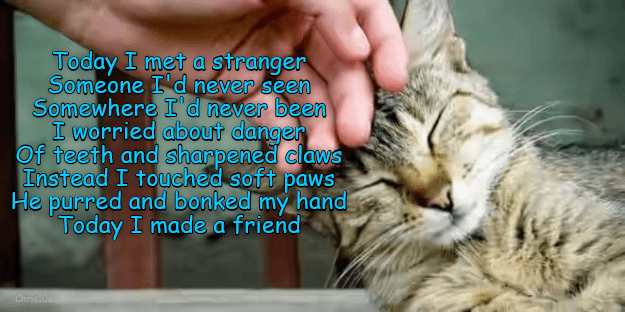 cat meme - Cat - Today I met a stranger Someone I d never seen Somewhere I'd never been I worried about danger Of teeth and sharpened claws Instead I touched soft paws He purred and bonked my hand Today I madea friend Christoa