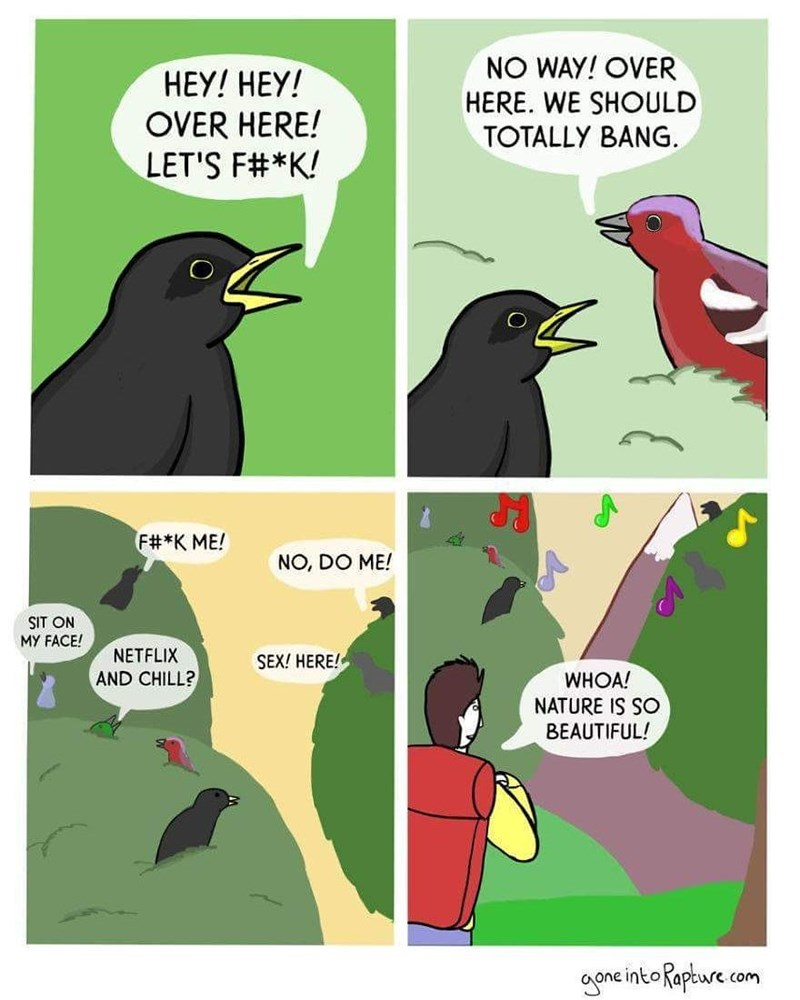 Funny meme about how birds all want to bang each other and that's why they sing.