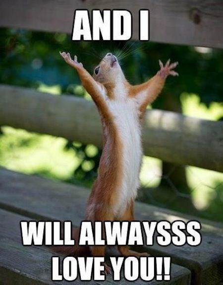 "squirrel meme with pic of squirrel singing Whitney Houston's ""I Will Always Love You"""