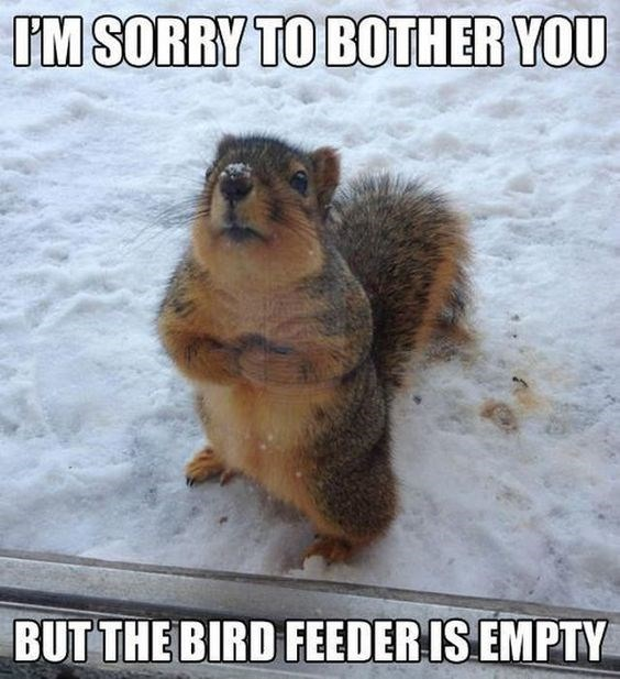 squirrel meme with pic of timid looking squirrel begging for food