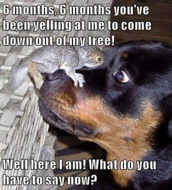squirrel meme with pic of squirrel confronting a dog