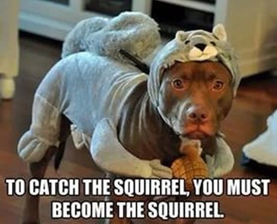 squirrel meme with pic of dog disguised as a squirrel