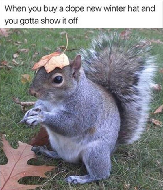 squirrel meme with pic of squirrel with a leaf on its head