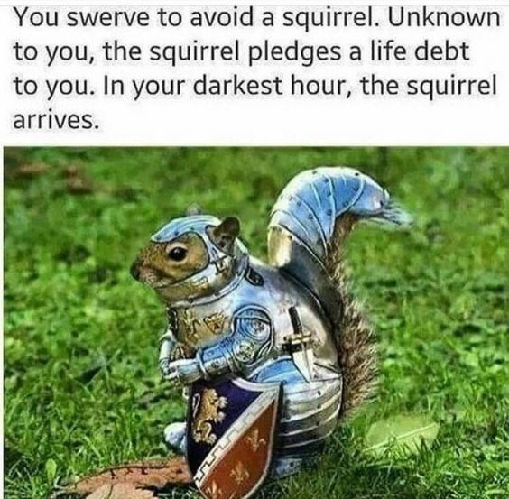 squirrel meme about a squirrel knight pledging alliance to you