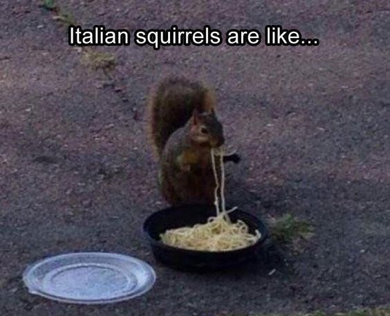 squirrel meme with pic of Italian squirrel eating pasta