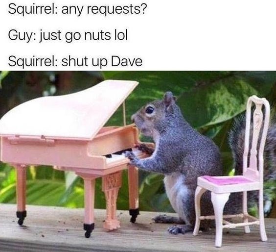 squirrel meme with a pun about squirrel pianists