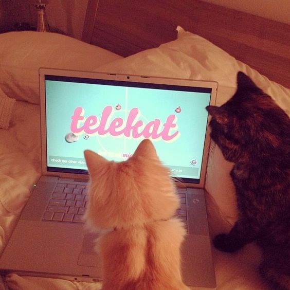 Cat - telekat ma check our cher